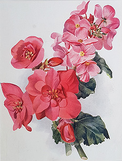 Flower print dated 1908