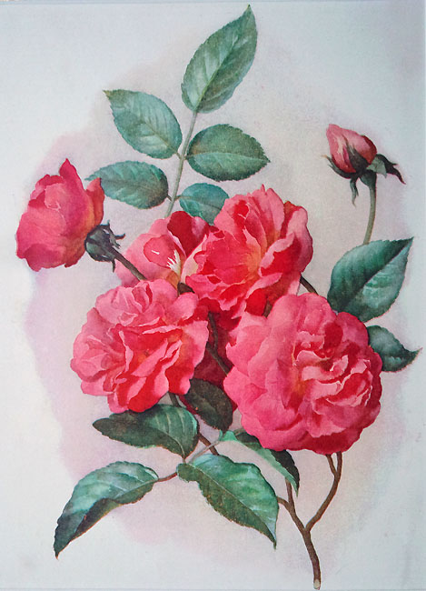 Old Floral Print - Climbing Rose