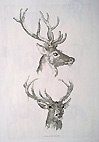 Stag head study etching by Hills - 19th century