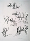Deer etching erly 19th century
