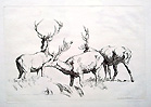Robert hills etching of Stag and deer