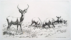 Study of Stag