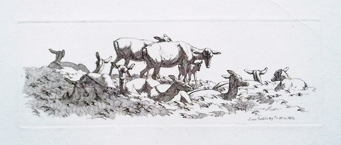 19th century original etching of Deer by Robert Hills
